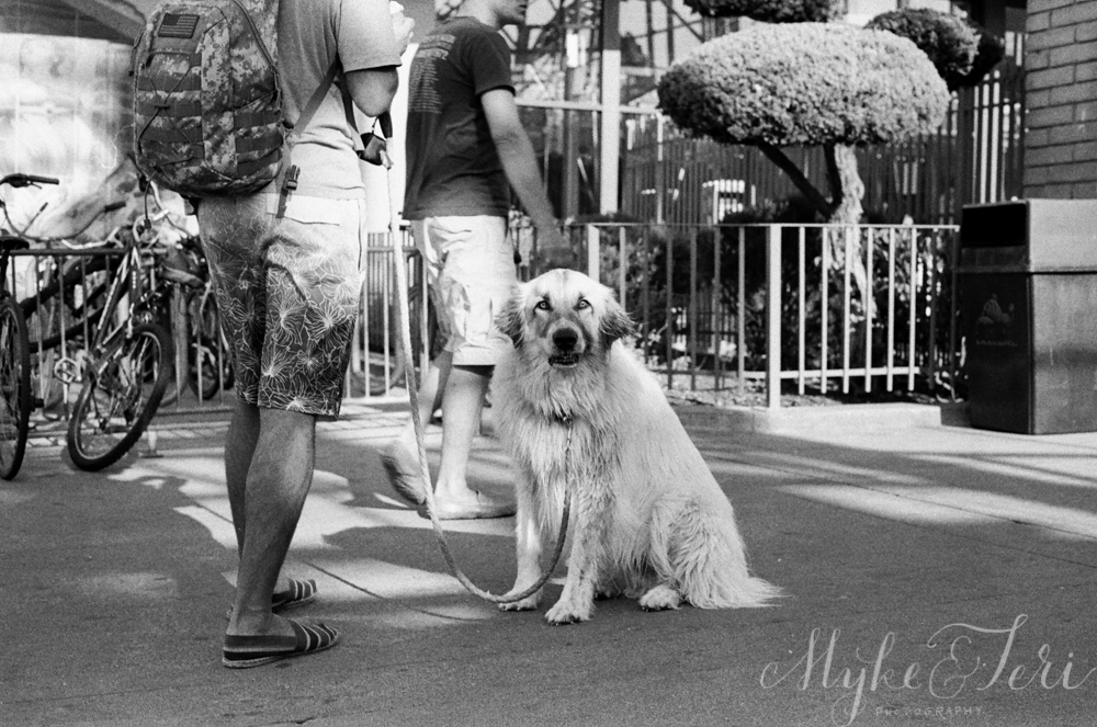 dogs shot on film