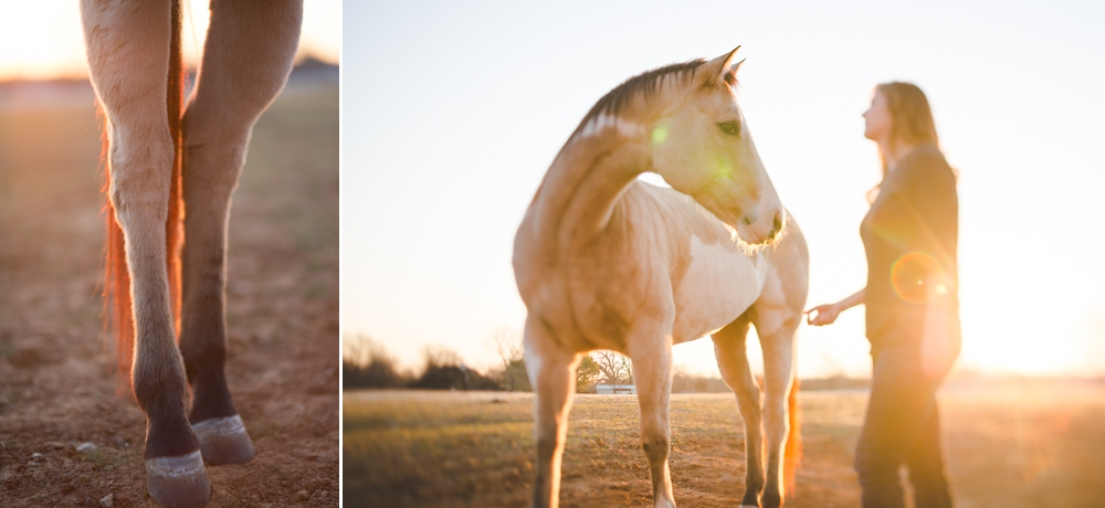 Dallas Texas Horse Portrait Session Photography 1