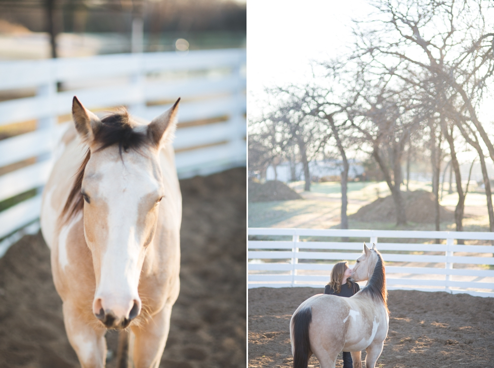 Dallas Texas Horse Portrait Session Photography 2