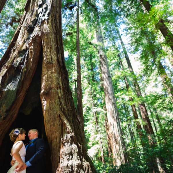 Wine, Hints of Blue, a Redwood Forest, a Whole Lot of You: Destination Wedding in Sonoma Valley Wine Country